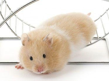 La Pause ou Comment faire sortir le Hamster de sa roue ?