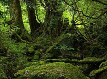7 principes pour survivre dans la jungle de la complexité