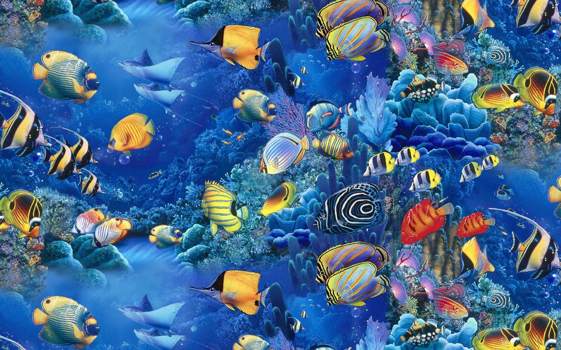 organisation océan